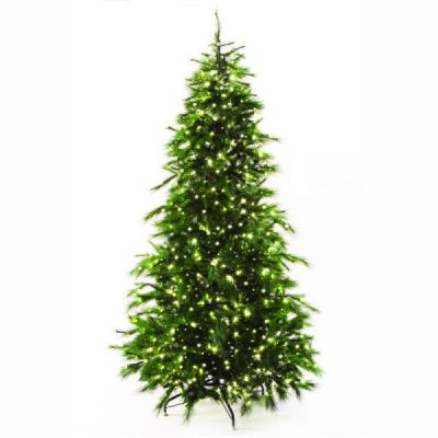 9.5' Scotch Pine Tree Warm White