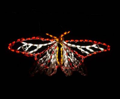 LED 3D Animated Butterfly Monarch