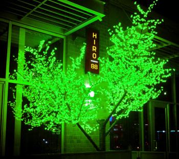 Green Cherry Blossom Tree