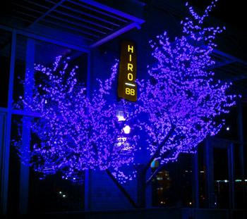 Blue Cherry Blossom Tree